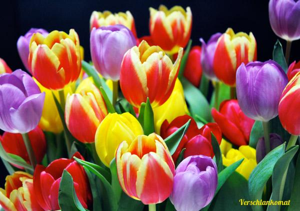 Bunte Tulpen statt Schokoeier